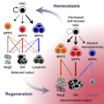 scientists-identify-progenitor-cells-for-blood-and-immune-system-healthinnovations
