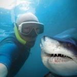 shark_selfie