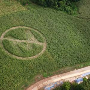 In this handout photo released by Greenpeace shows an aerial view of a crop circle made by local farmers and Greenpeace volunteers in Isabela province, 300 km northeast of Manila, on Saturday Sept. 30, 2006. The crop circle, with a slash over the letter 'M' symbolizes farmer rejection of alleged genetically modified Bt corn crops from Monsanto corporation. (AP Photo/Greenpeace,Melvyn Calderon,HO)